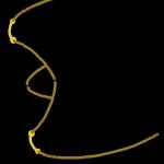 westernbridle