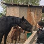 lovas_nemzet_2017_tavasz_amatőr_78